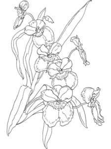 цветок орхидея раскраска