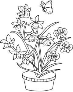 орхидеи в горшке