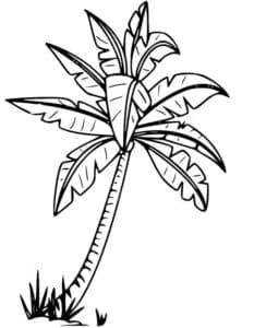 пальма раскраска для детей скачать