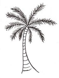 пальма картинка