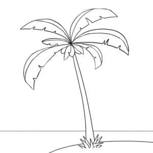 пальма и океан