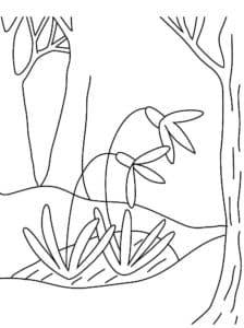подснежники и деревья