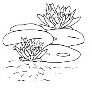 красивые лилии на пруду раскраска