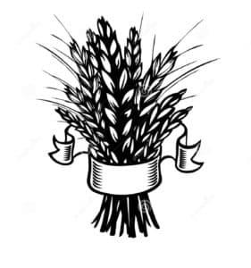 пшеница с лентой