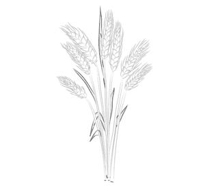 раскраска для детей пшеница
