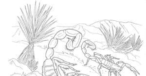 скорпионы в пустыне
