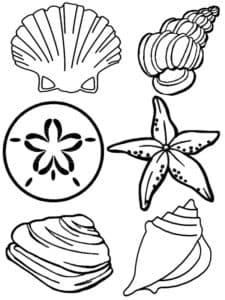 морские ракушки и звезды