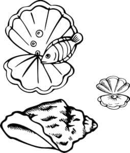 ракушки и рыбка