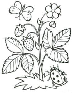 Куст малины и насекомые