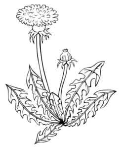 цветочек раскраска для ребенка