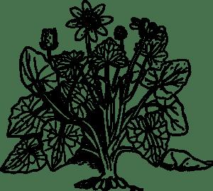 Цветы антистресс