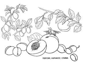 персик ананас и слива