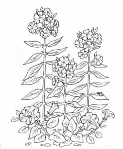 цветы с длинным стеблем раскраска