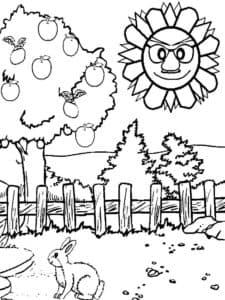 Солнце зайчик и дерево