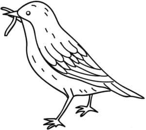 красивая птица
