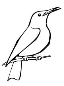 птица скворец