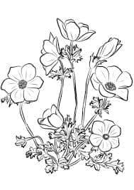 Ромашки и хризантемы