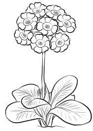 Маленькие цветочки картинка