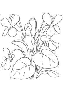 красивые цветы с большими листами