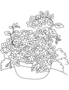 Раскраска жасмин в вазе