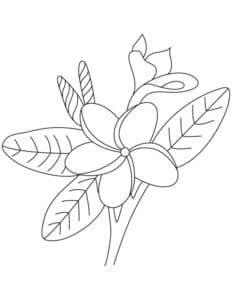 цветок жасмин с узорами