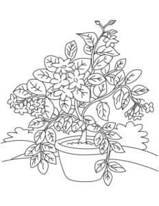 Букет цветов жасмин в горшке