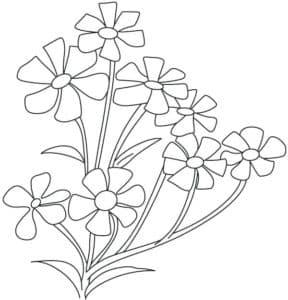 цветочки жасмин раскраска детская
