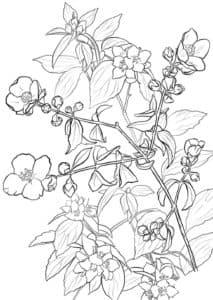 Цветы Жасмин