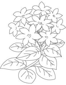 жасмин цветы с листьями