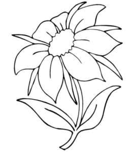 большой цветок жасмин