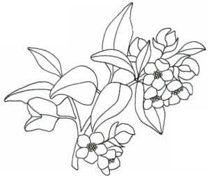 жасмин раскраска для детей