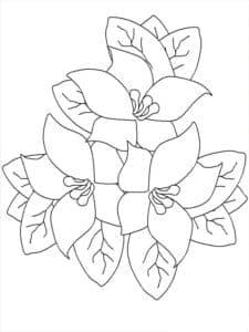 три цветочка жасмин