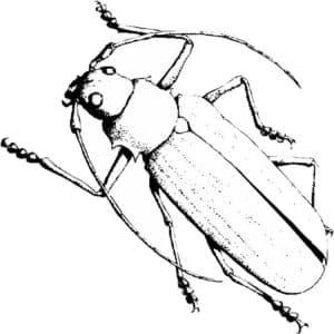 длинный жук
