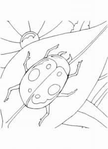 жук на листке раскраска