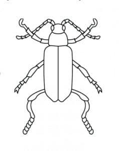 жук с тонкими лапами