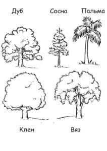 виды деревьев