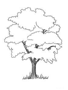 Дерево и трава раскраска