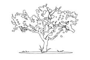Дерево широкое