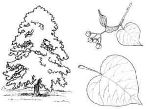 Раскраска детская дерево