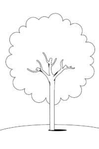 Дерево картинка