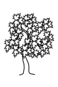 Дерево клен раскраска детская