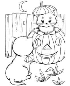 кися в тыкве на хеллоуин