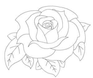 раскраска для детей роза
