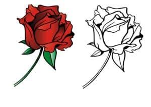 роза и пример раскраски