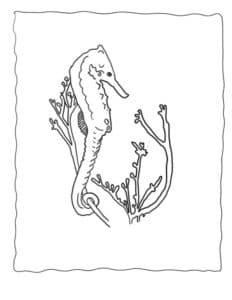 морской конек и водоросли