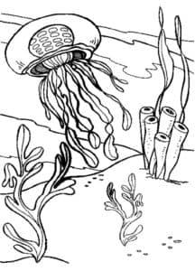 медуза и водоросли