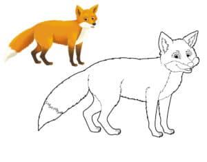 раскраска большая лиса с цветным образцом