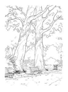 лавочка под деревьями