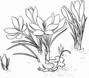 цветочки раскраска детская