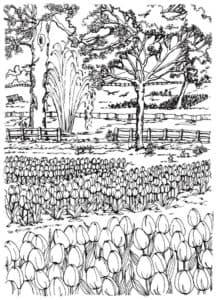 тюльпаны и деревья